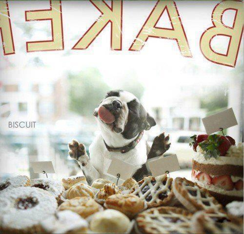 dog bakery