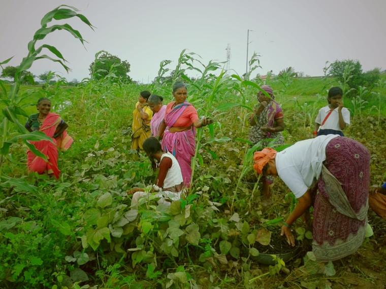field farmers