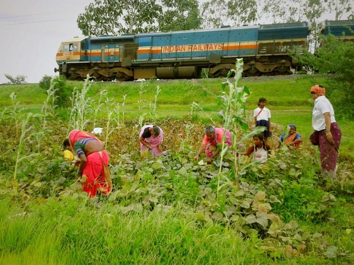 field farmers train