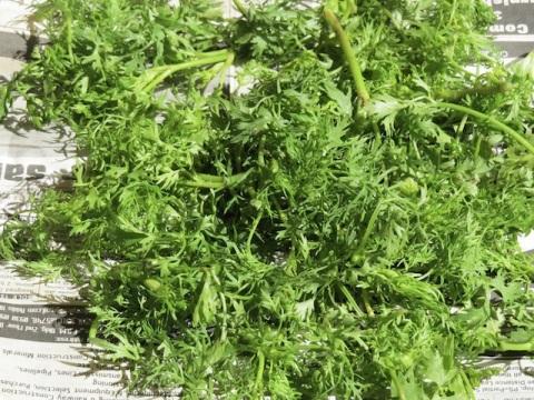 coriander cilantro leaves