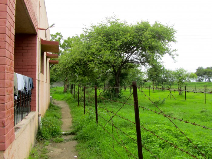 india backyard