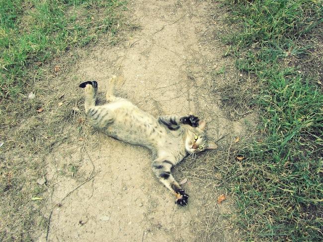 backyardcat