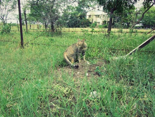 backyardcat1