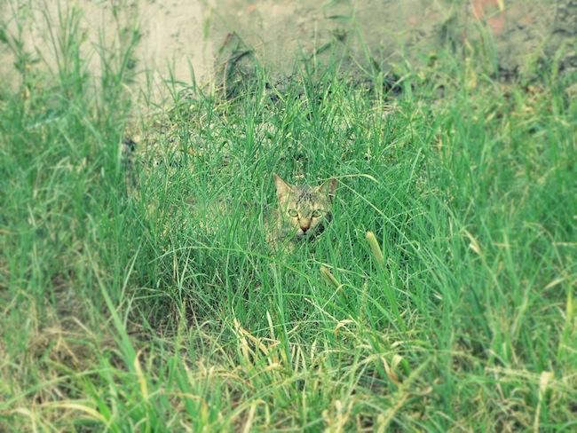backyardcat2