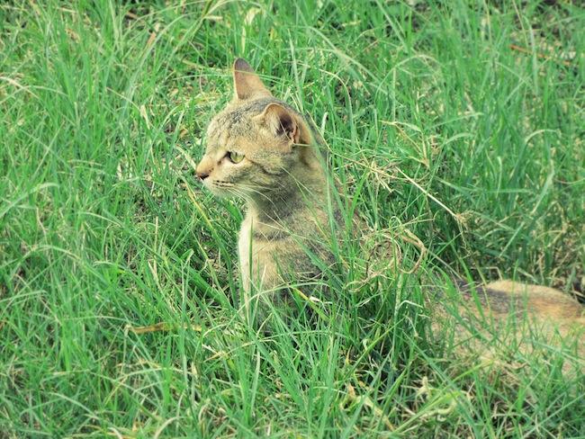 backyardcat3