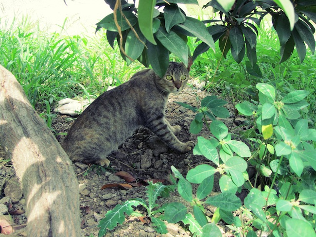 backyardcat4