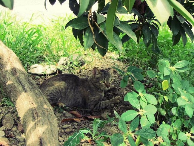 backyardcat5
