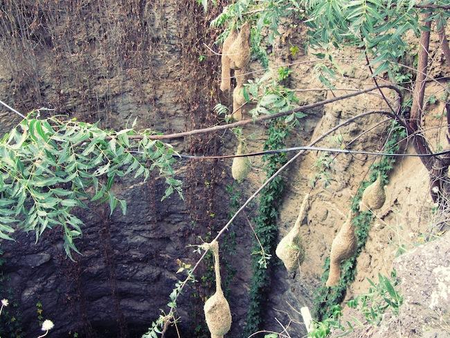 open well pendant nests