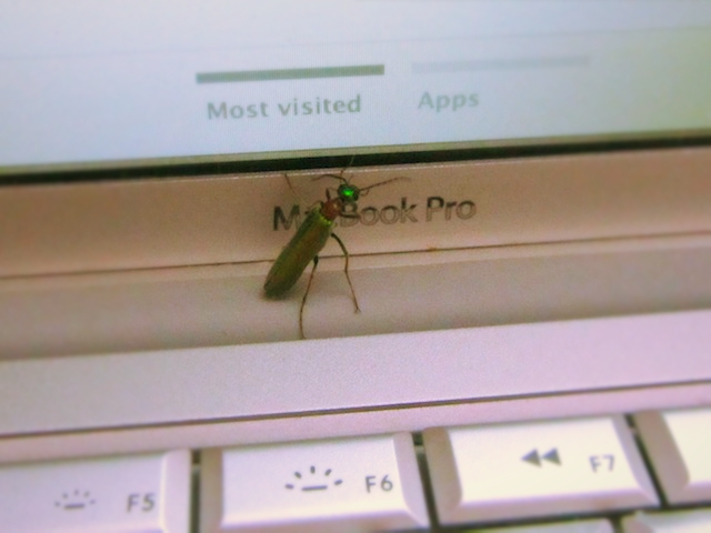 india bug laptop