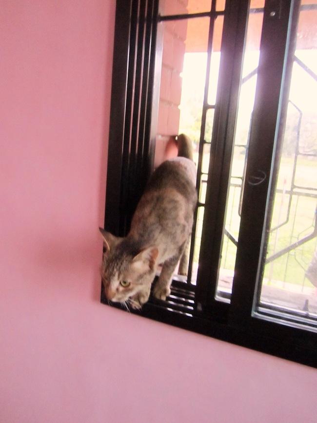 cat window1