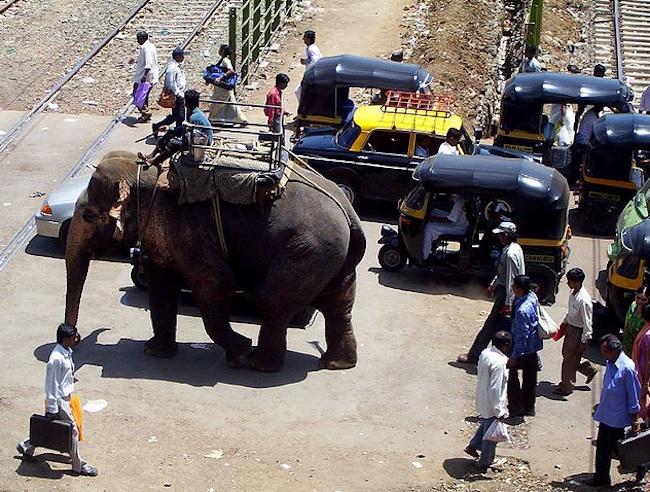 elephant railway crossing