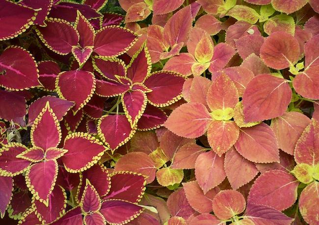Amazing plants found in India.