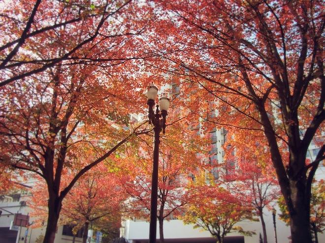 portland autumn