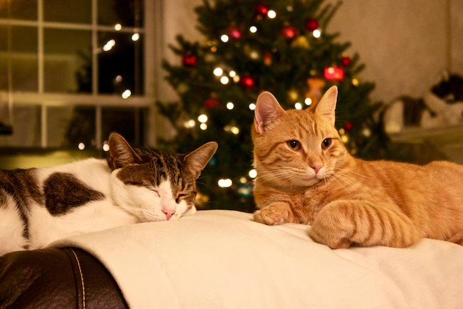 2012christmas cats