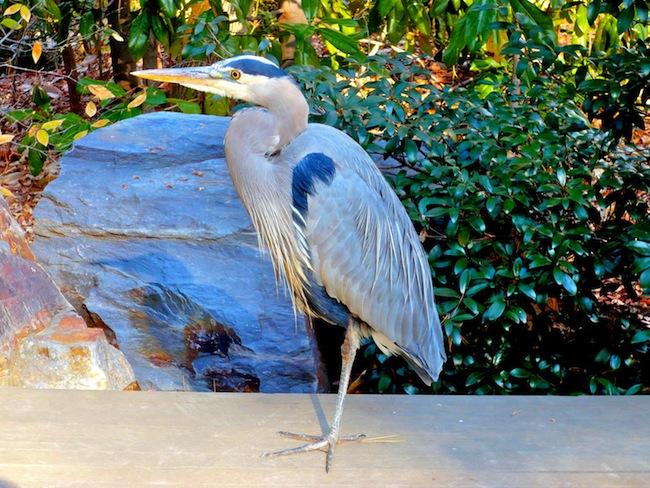 A bird at Duke Gardens, Durham, NC