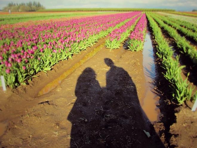 tulip farm oregon shadows