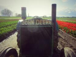 tulip farm oregon tractor2