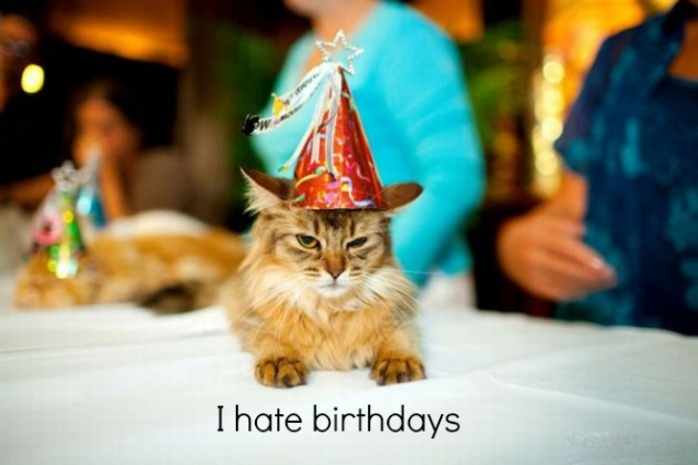 cat hate birthday.jpg