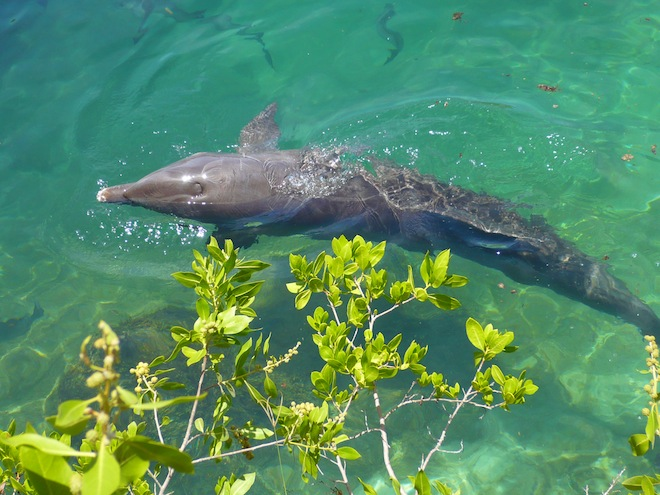 cancun xel ha dolphin
