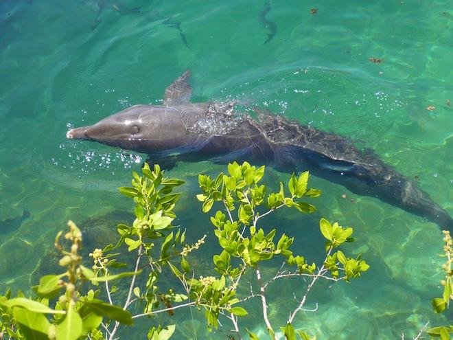 cancun xel ha dolphin