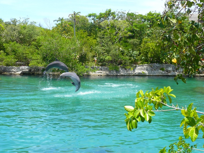 cancun xel ha dolphins