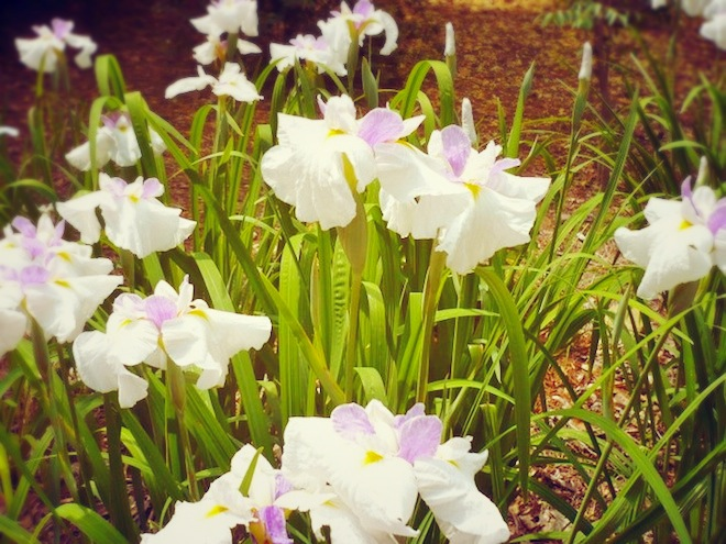 duke gardens durham flowers