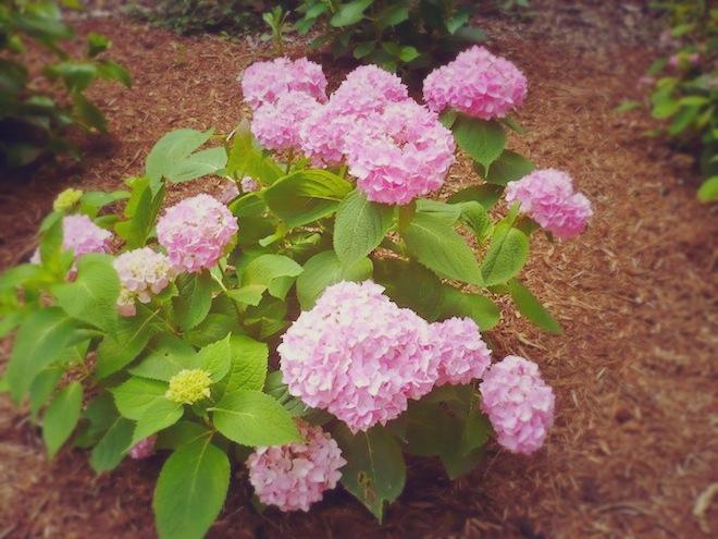 duke gardens durham flowers1