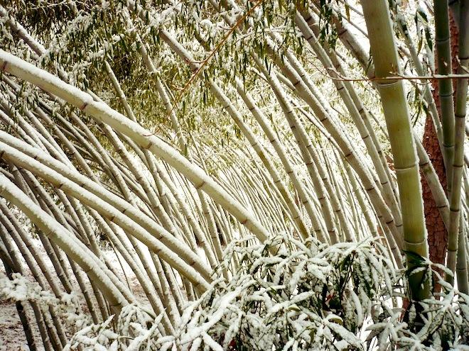duke gardens durham snow4