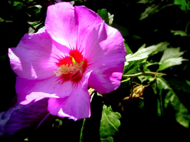 Flower found in London.