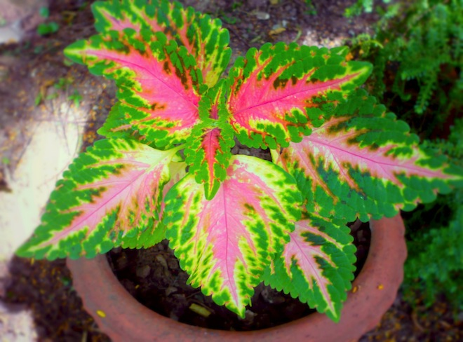 Plant in India.