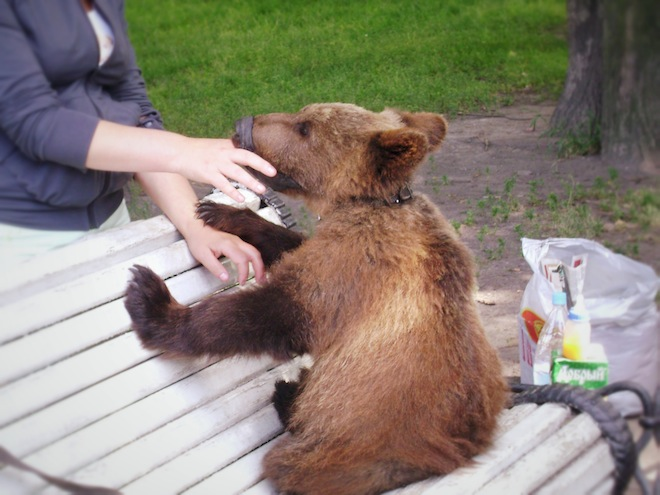 A pet bear at the park.