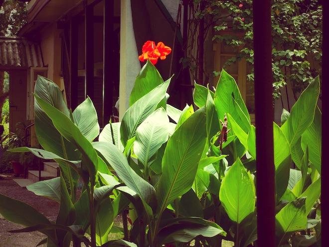 flower meherazad india