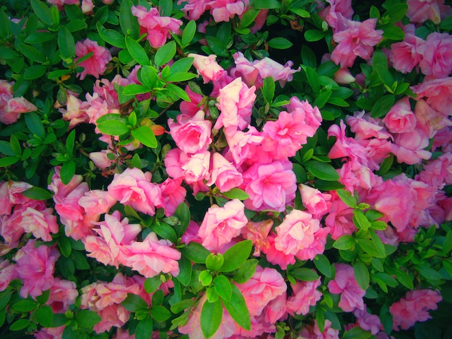 flowers portland
