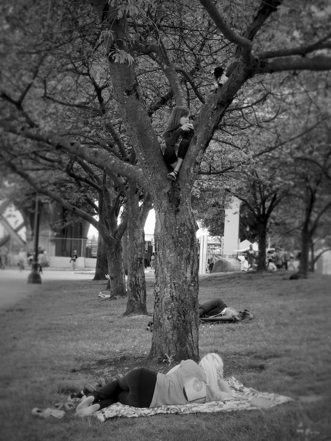 portland downtown park tree bw