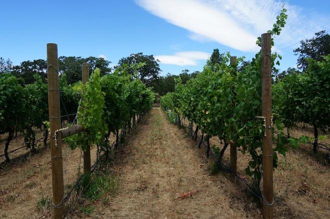 syncline winery washington2