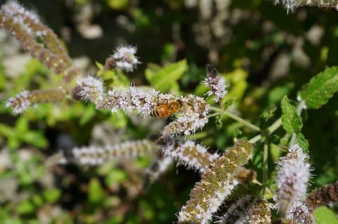 portland saltandstraw inature bee