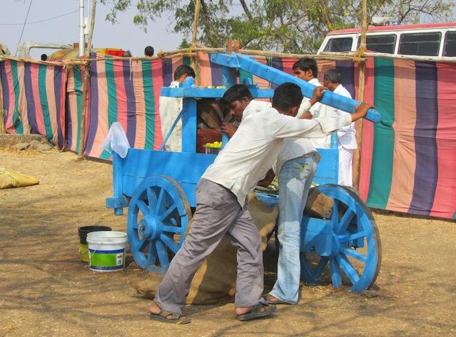 sugarcane india