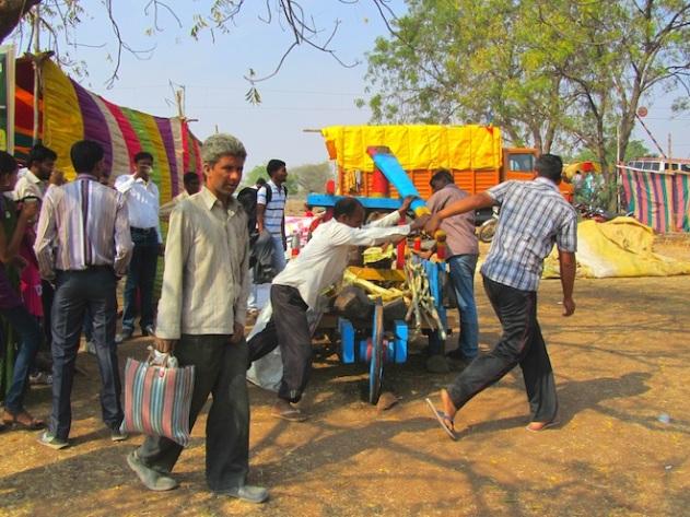 sugarcane india6