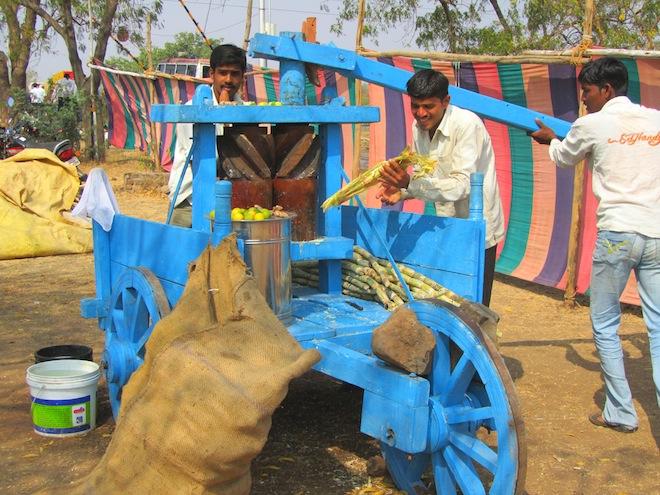 sugarcane india8