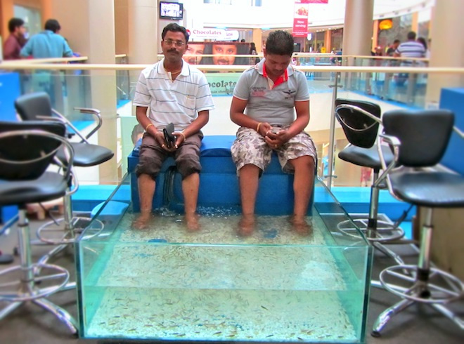 feet fish tank india