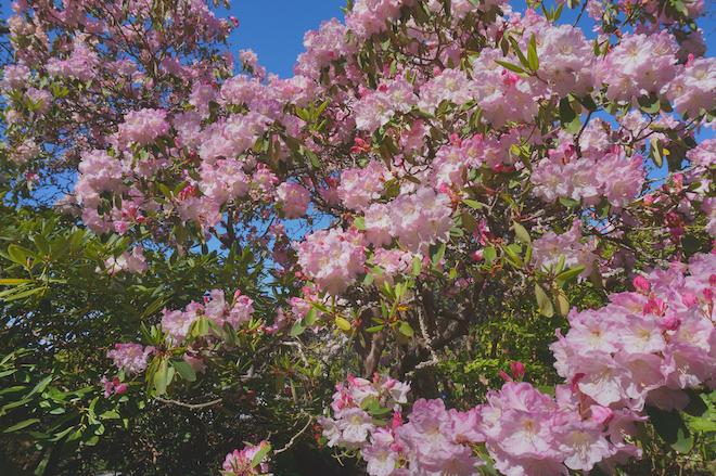 abkhazi garden victoria bc2