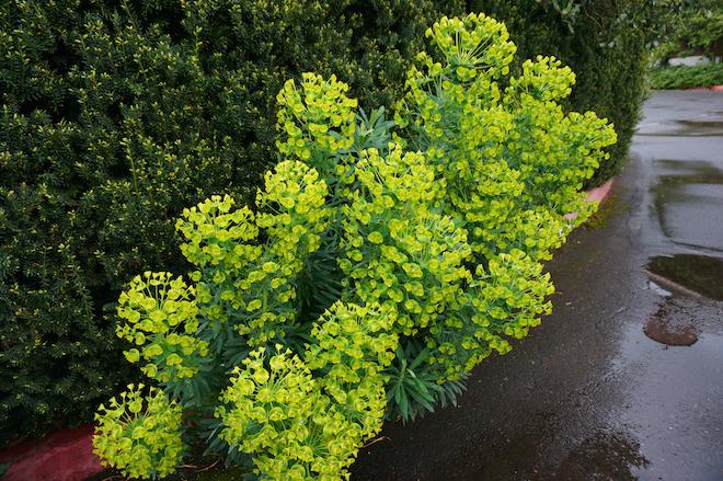 edgefield plants