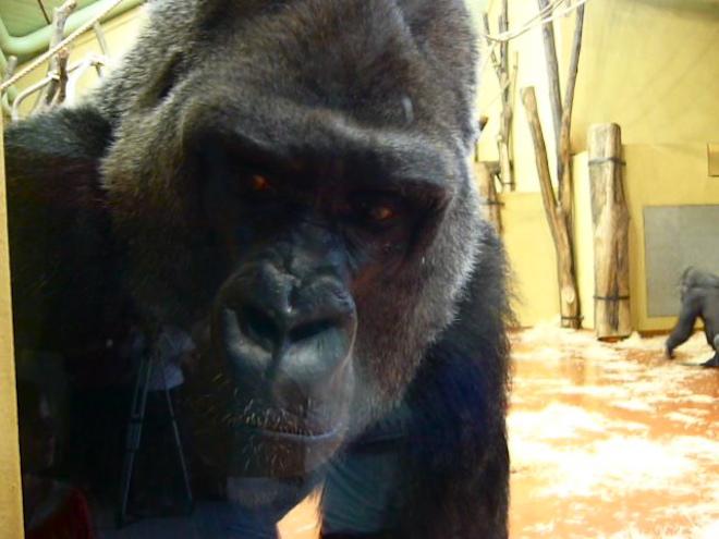 animal monkey zoo budapest