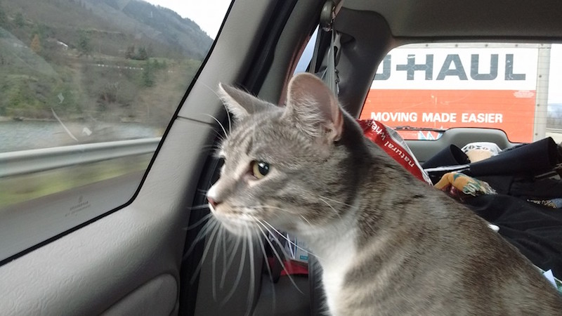 moving road cat