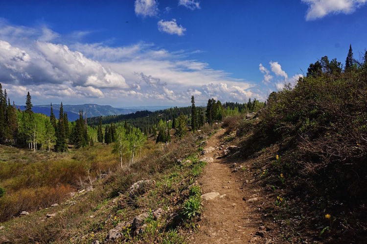 hiking the white pine lake trail in logan canyon utah a new life wandering. Black Bedroom Furniture Sets. Home Design Ideas
